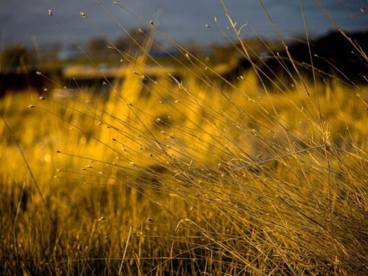 How to Fix Yellow Grass