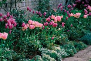 Tulips with Annuals and Perennials
