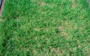 how to identify type of grass