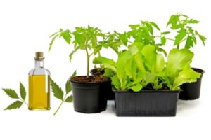 how to use neem oil on plants