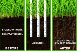 Advantages of Core Aeration