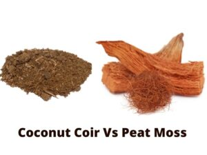 Coconut Coir Vs Peat Moss