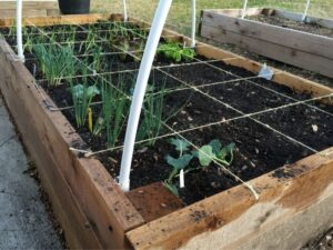 Layout For Raised Bed Vegetable Garden