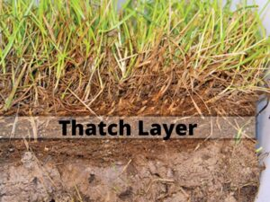 dethatcher and aerator