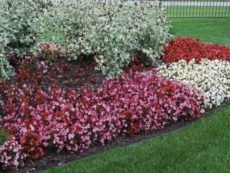 flower bed shapes