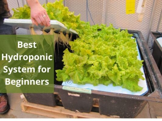 Best Hydroponic System for Beginners