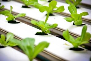 Types of Hydroponics Systems