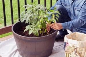 safe containers for growing vegetables