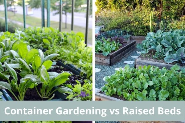 Container Gardening vs Raised Beds