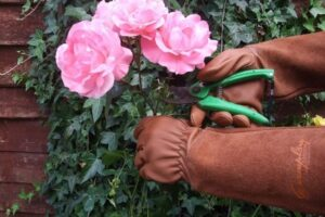 Rose Pruning Gloves for Men and Women