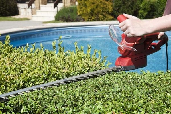 Can You Use a Weed Eater To Trim Hedges